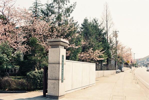 金沢桜百景(金沢錦丘高校)